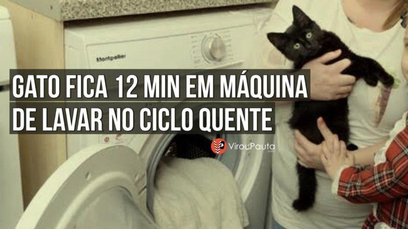Gato fica 12 minutos em ciclo quente de máquina de lavar, veja o que aconteceu