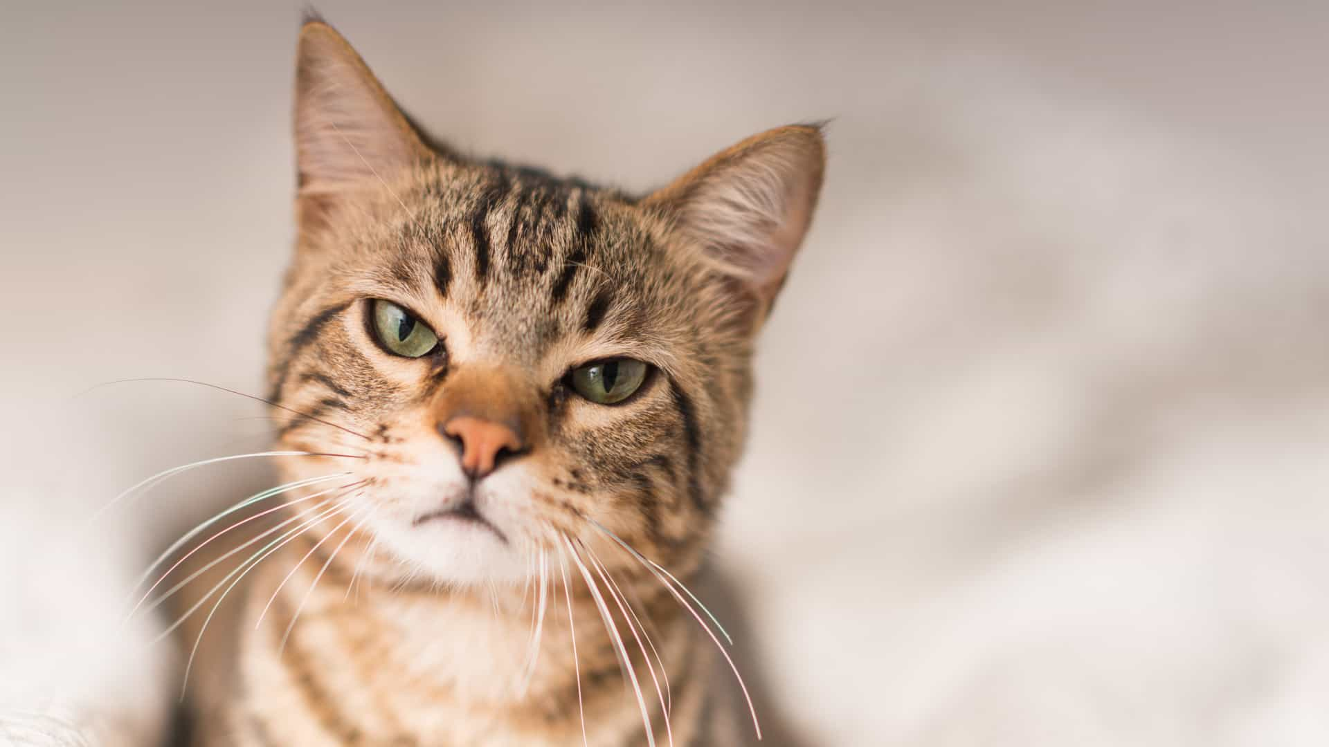 """Mulher engravida e marido culpa gato por """"furar"""" camisinha"""