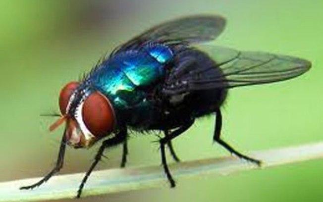 Idoso explode cozinha após tentar matar mosca com raquete elétrica