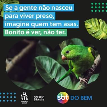 """""""Me tira dessa gaiola"""" Campanha da AMPARA e SBT, traz reflexão sobre a vida dos pássaros engaiolados, confira"""