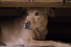 FOGOS DE ARTIFÍCIO: 9 Dicas para acalmar os animais de estimação na virada de ano