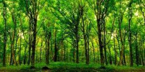 Restauração florestal contribui para o equilíbrio climático